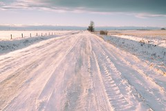 Happy New Year (Tracey Rennie) Tags: alberta snow winter road tracks blowingsnow cold fence sowindy wow