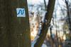 Neckarsteig im Winter (JBsLightAndShadow) Tags: heidelberg nikon nikond750 d750 tamron tamronsp2470mmf28divcusd winter winter2017 schnee snow wald odenwald forest königstuhl baum tree bäume trees sonne sonnenschein sun sonnig sunny sunshine sunset sonnenuntergang licht sonnenlicht