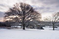 Newlands Corner in the Snow E1130229_02-PSEdit (tony.rummery) Tags: em10 guildford landscape mft microfourthirds newlandscorner omd olympus snow sunrise surreyhills winter albury england unitedkingdom gb