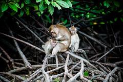 monkeys-1006