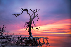 Erosion Sunrise (Explored 2/3/17) (APGougePhotography) Tags: sun sunrise color boneyard tree beach water longexposure southcarolina carolina south sand reflection charleston capers island sc nikon nik nikcollection colorefexpro nikond800 d800