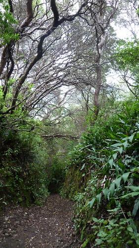im Gespensterwald