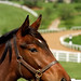 Lexington Kentucky - Donamire Farm A Handsome Profile