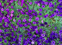 Just Flowers (zai Qtr) Tags: light green nature paint random outdoor gcc qatar iphone manal 2022 aspirezone iphoneography parpal zaiqtr
