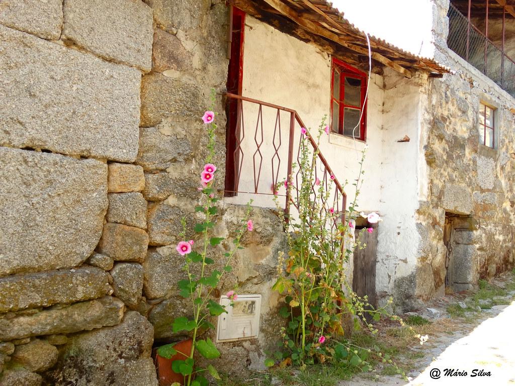 Águas Frias (Chaves) -  ... rua florida espontaneamente ...