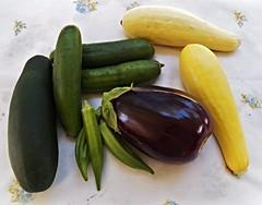 garden veggies for supper (MissyPenny) Tags: summer food green vegetables yellow garden pennsylvania eggplant squash zucchini okra edible buckscounty cucumbers bristolpennsylvania