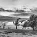 Karon Beach In Black & White