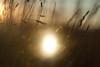 *** (birdcloud1) Tags: incubation glow light hatching growing illumination radiance dreams field grass canoneos400d eos400d multipleexposure canon50mm18 50mm18 amandakeogh amandakeoghphotography birdcloud1 nest nurture hope waiting life