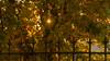 MOUSTIER SAINTE MARIE-0782 (philippemurtas) Tags: provence automne alpes de haute verdon feuille feuillage fer lumiere couleur nikon france soleil dorée ancien moustiersaintemarie detail autumn foliage iron light color sun
