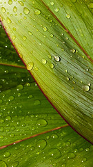 10049-90256-37 (kangkang300402) Tags: abstract artistic art background botanical botanic carini close closeup color colorful cool creative detail desktop dew drop droplet floral foliage fresh green h20 hawaii joe joecarini leaf leave line liquid lush macro magenta moist natural nature natureart pattern plant plantstreeart raindrop rain red shade shape texture tileaf ti vein vibrant vivid water wet wild