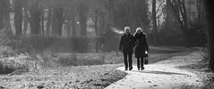 Herfst wandeling. (Digifred.nl) Tags: digifred 2016 bw blackwhite blackandwhite monochrome herfst wandeling walk autumn park bos nikon1j5