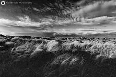 Bamburgh, Northumberland (Silent Eagle  Photography) Tags: sep silent eagle photography silenteaglephotography bamburgh landscape monochrome blackandwhite bw sky plants canon canoneos5dmarkiii outdoor clouds weather wind north northeast northumberland iso50 shadows