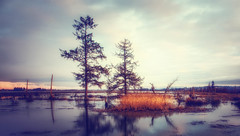 Early Morning Marsh (MontanaRoots (aka Craig)) Tags: 1000faves sunrise marsh pugetsound slough trees water wow