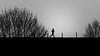 running (pat.netwalk) Tags: runner silhouette zurich copyrightpatrickfrank running outdoor