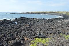 Ka Lae, Hawaii (David A's Photos) Tags: ka lae coast line photography january 2017 hawaii big island