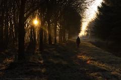 Let's make 2017 wonderful... (CarolienCadoni..) Tags: sonyslta99 sony sal70200g2 70200mmf28gssmii backshot backlight forest sun sunlight light sunbeams earlymorning sunrise trees shadows outdoor landscape nederland netherlands nieuwbuinen drenthe