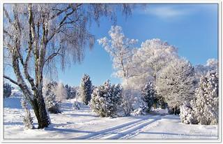 Wanderweg im Winter am Turmberg