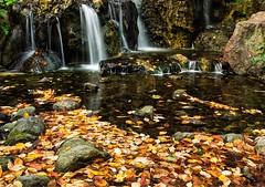 -Shirotori- (Ozan Aktas) Tags: shirotori sigma35mm14 sigma canon5dmark3 adventure travel nagoya japan garden nature landscape
