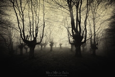 Akelarre (Mimadeo) Tags: scary forest fear horror mood monochrome landscape magic tree nightmare light nature mystery spooky darkness halloween woods evil creepy fantasy gothic mysterious surreal branch enchanted ghost atmosphere twisted sepia