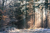Winter / Hiver (tribsa2) Tags: winter hiver forest foret arbres bomen trees bos