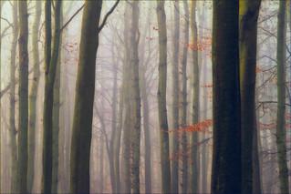 Ashridge Mist I
