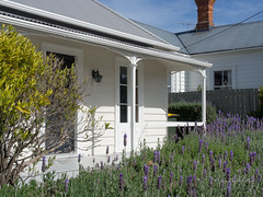 A Lavender hedge (idunbarreid) Tags: lavender