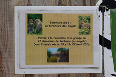 Vallée des singes (Ulli J.) Tags: zoo frankreich france frankrig frankrijk poitoucharentes vienne romagne valléedessinges berberaffe magot barbarymacaque barbaryape berberabe macaqueberbère berberaap