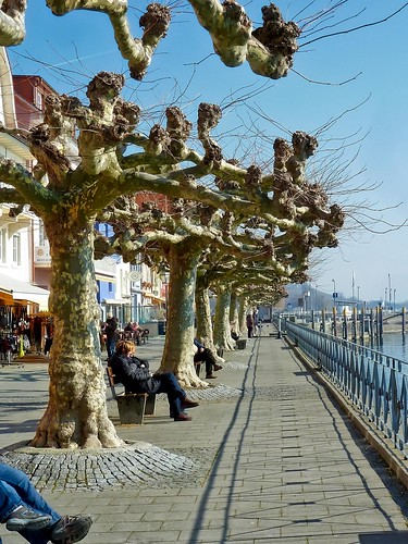 Meersburg Germany Feb 22, 2012, 8-51 AM_edit