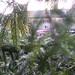 2007-0001-aa-tree-abdul