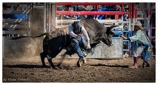 2015 Elks Rodeo