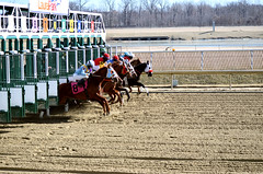 2015-02-13 (38) r3 and they're off (JLeeFleenor) Tags: photos photography md marylandhorseracing marylandracing laurelpark gate jockey   jinete  dokej jocheu  jquei okej kilparatsastaja rennreiter fantino    jokey ngi horses thoroughbreds equine equestrian cheval cavalo cavallo cavall caballo pferd paard perd hevonen hest hestur cal kon konj beygir capall ceffyl cuddy yarraman faras alogo soos kuda uma pfeerd koin    hst     ko  maryland