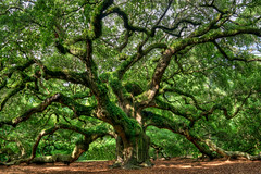 Angel Oak - HDR