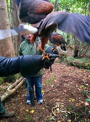 Falconary Ireland006