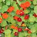 """Botanischer Garten Berlin • <a style=""""font-size:0.8em;"""" href=""""http://www.flickr.com/photos/25397586@N00/19772668051/"""" target=""""_blank"""">View on Flickr</a>"""