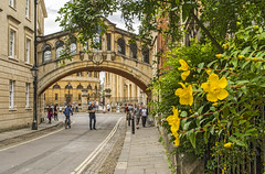 Bridge of Sighs (fotofrysk) Tags: flowers england yellow oxford pedestrians bridgeofsighs newcollegelane dsc0333 nikond7100