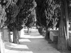 IMG_5497 (T.J. Jursky) Tags: canon europe croatia adriatic dalmatia tonkojursky