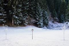 Freschetto ciò... (Alberto Grego Photography ©) Tags: freddo fresh ice winter inverno comelico cadore tree snow bird uccello ucelli fuji fujifim xt1