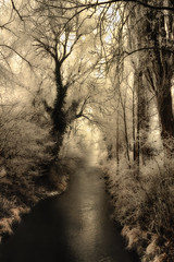 Fehlbach Erding / dreaming time (drummerwinger) Tags: rot fehlbach erding sempt canon700d sigma winter cold frozen ice fog nebel foggy wasser water bach brooks