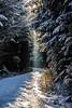 The Beginning (*Capture the Moment*) Tags: 2017 backlight backlit bäume dunst forest fotowalk frost gegenlicht landschaften licht schnee snow sonnenstrahlen sonya7m2 sonya7mii sonya7mark2 sonya7ii sonyfe2890macrogoss sonyilce7m2 trees wald wetter winter