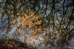 Reflexionen (Dagmar' s Fotos) Tags: atmosphere scenic wasser water stimmung reflektionen reflexionen reflections