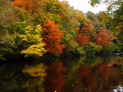 Autumn on the river (llocin) Tags: autumn reflection red green yellow gold orange warm