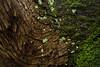 Where the Mountains Meet the Forest (Matt Molloy) Tags: mattmolloy photography cedar tree trunk bark cracks moss lichen tension twisted green guelph ontario canada nature lovelife
