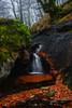 Dream corners (Javy Nájera) Tags: belaustegui gorbeia otoã±o paisvasco agua hayas hayedo naturaleza paisaje rão autumn water beech nature landscape river otoño río