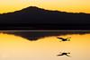 Approaching the Laguna Chaxa (josefrancisco.salgado) Tags: 70200mmf28gvrii atacamadesert chile d810a desiertodeatacama lagunachaxa nikkor nikon provinciadeelloa reservanacionallosflamencos ave bird desert desierto fauna flamenco flamingo pã¡jaro salar saltflats iiregióndeantofagasta