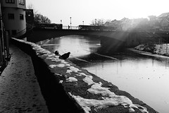 Tübingen (stefankamert) Tags: stefankamert street tübingen fujifilm fuji x100 x100s bw sw baw blackandwhite blackwhite noir noiretblanc monochrome river ice snow winter light sunbeams dove bridge frozen city neckar