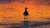 _B4A0116 (wjdweerdt) Tags: ijs winter watervogels ganzen oostvaarderplassen