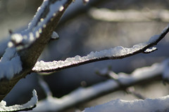 Light comming through (Steenjep) Tags: vinter winter jylland danmark denmark sne snow herning dof sun sol reflex refleks depthoffield depthoffocus