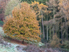Between Us (Damian_Ward) Tags: damianward photography ©damianward oxfordshire oxon littlewittenham woodland trees