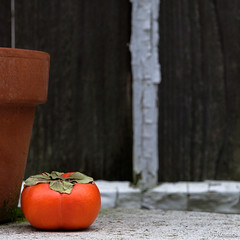 Persimmon & Pot (PJ Resnick) Tags: perryjresnick pjresnickgmailcom ©2017pjresnick ©pjresnick pjresnick light fuji fujifilm digital shadow texture shadows wa washington angle perspective naturallight xf fujinon resnick cascadefairwood design plant depthoffield black fujixpro2 xpro2 athome aroundthehouse color colour green 56mm fujinon56mmf12 56mmf12 foliage leaf fruit yellow white persimmon brown orange pjresnickphotographygmailcom square squareformat