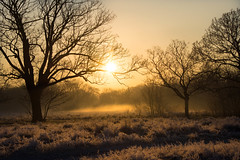 January in Wanstead Park (cuppyuppycake) Tags: january wanstead park steam sunrise frozen chilly winter nikon d7200